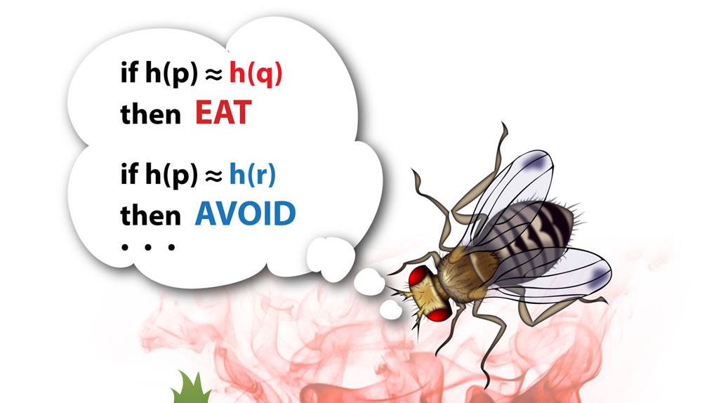 果蠅的腦啟發搜索引擎的未來發展