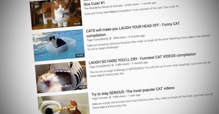 微軟說這是真的:貓視頻會分散工作者的專注力